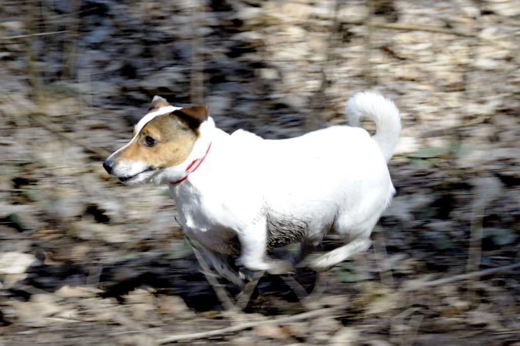 Собаки способны обнаружить незначительные изменения температуры кожи, что делает их полезными для определения наличия у человека лихорадки и других болезней. Фото: Город А