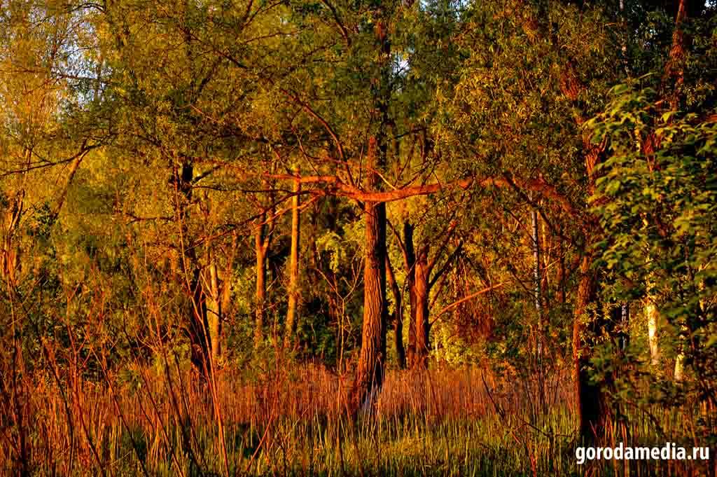 Лес всегда в поле зрения человека и сопутствует нам на всём пути развития. Фото: gorodamedia.ru